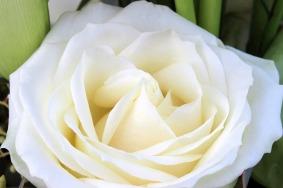 rose-1166376_960_720